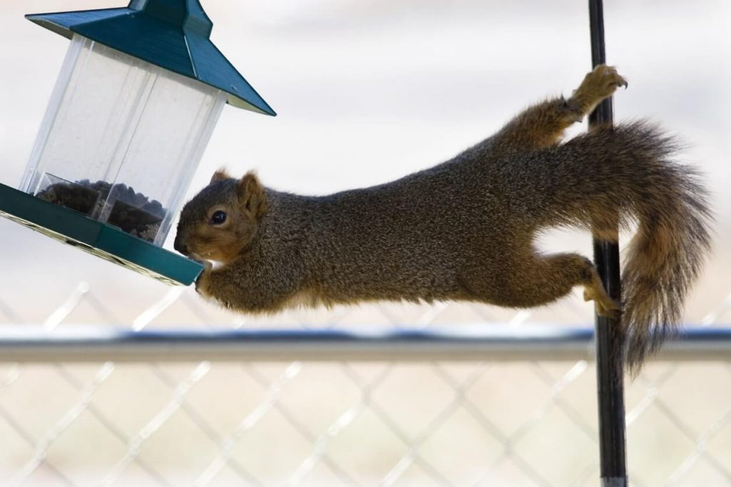 Treasure-Coast Squirrel Removal